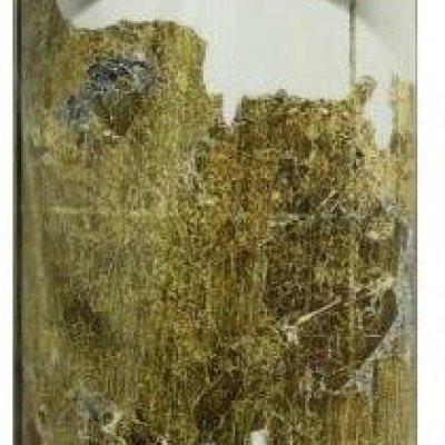 Mural Mapa Múndi Dourado Peel&Stick